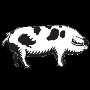 pig 300x300 - pig